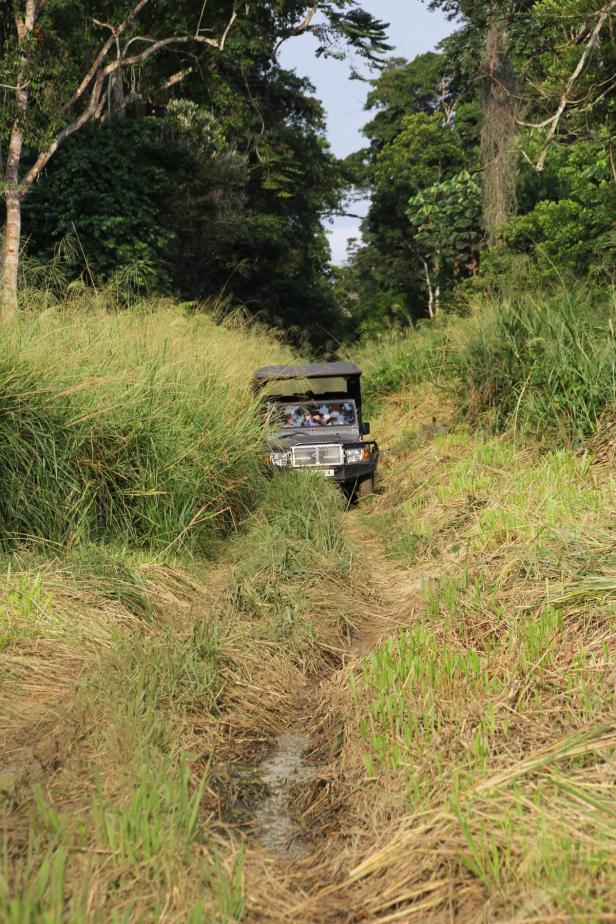 Safari, Republik Kongo…