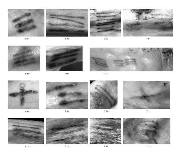 Die mit multispektralen Techniken fotografierten Tätowierungen