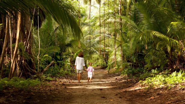 Palmen und Kasuarinen machen Denis Island zum Tropen-Paradies.