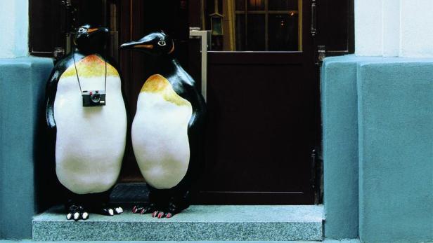 Die Pinguine machten Puchner einem breiten Publikum bekannt.
