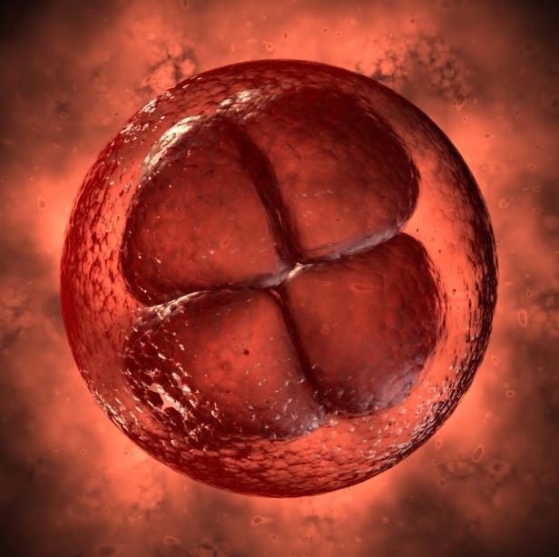 Früher Embryo