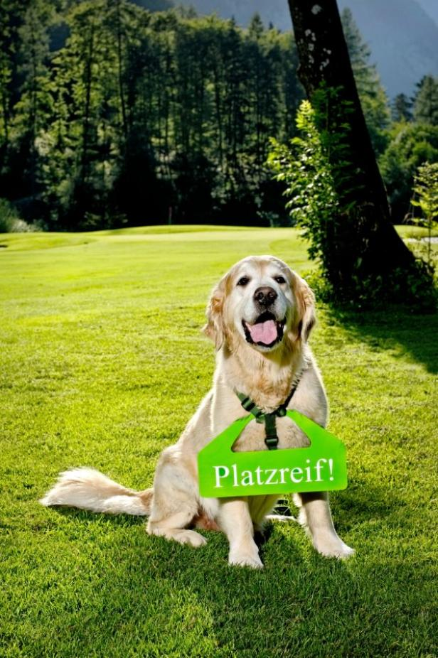 Hotel Gut Brandlhof, Golfplatzreife für Hunde…