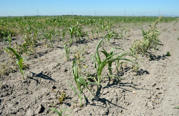 Dürren als Folge des Treibhauseffekts.