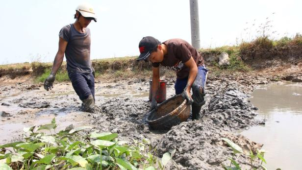 Bauern versuchen im sonst fruchtbaren Mekong-Delta Fisch zu fangen