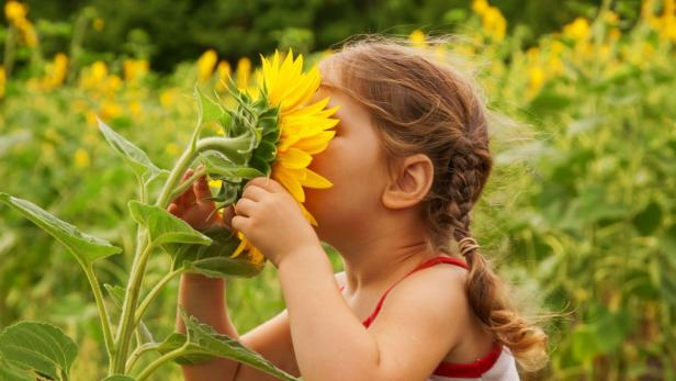 Child and sunflower, summer, nature and fun.…