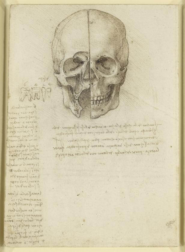 War das Totenköpfchen da Vincis Handschmeichler? | kurier.at
