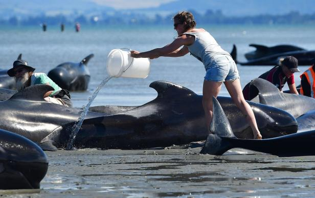 NZEALAND-ANIMAL-WHALES-CONSERVATION
