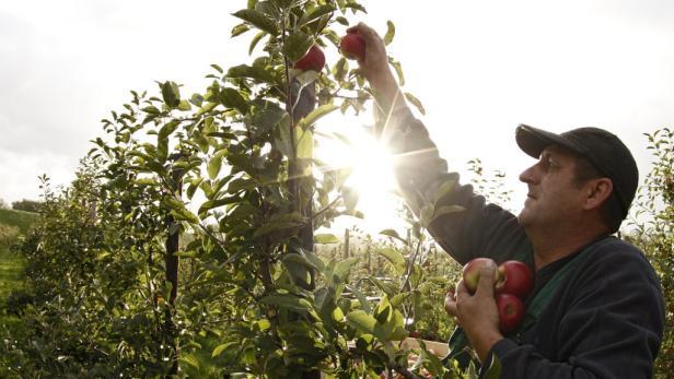 Neues Geld auch für Obstbauern