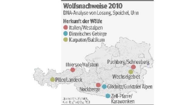 Wölfe in Österreich.