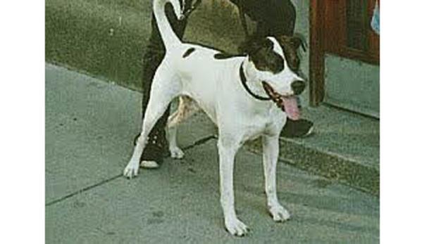 """Hund """"Ike"""" hat zugebissen."""