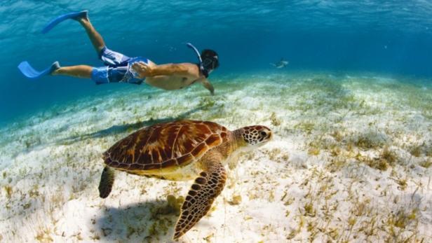 Karibik, schnorcheln, Wasserschildkröte…