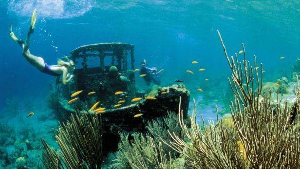 Caribbean Tourism Organisation, honorarfrei, tauch…