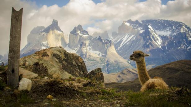 Der Nationalpark Torres del Paine ist eine Berühmtheit in Patagonien. Jedes Jahr besuchen 120.000 Urlauber die außerirdisch schöne Landschaft.