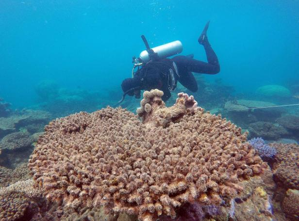 AUSTRALIA-ENVIRONMENT-CLIMATE-REEF-CONSERVATION