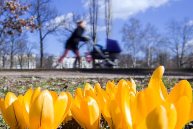 Frühling - Krokusse und Frau mit Kinderwagen