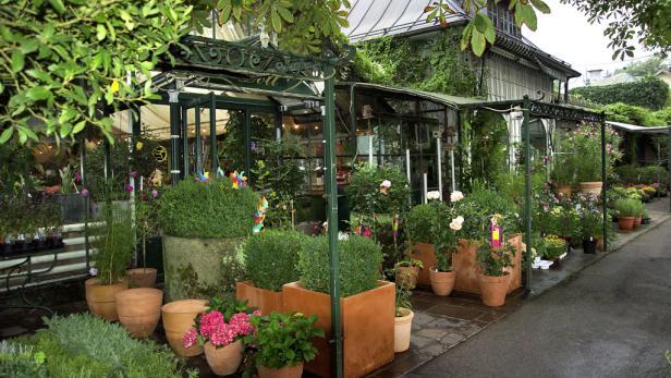 Hochwertige Pflanzen und Schnittblumen sind die Spezialität der Kunstgärtnerei im Herzen Salzburgs. Zu den Highlights zählen Orchideen, alte Rosensorten, Anemonen und Buchsbaum.