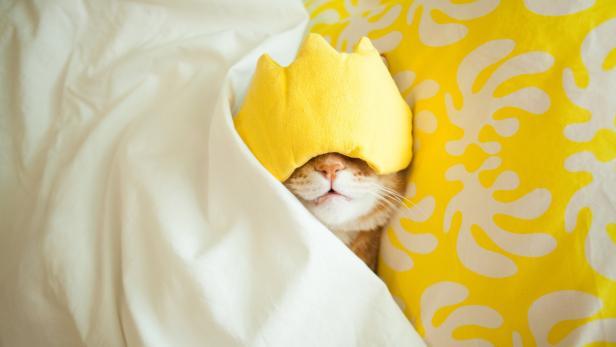 Nachmittagsschlaf