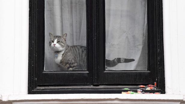 Nur die Botschaftskatze schaute am Freitag aus dem Fenster