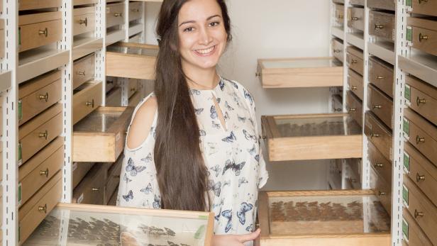 Sarah Saadain in der Schmetterlingssammlung des NHM