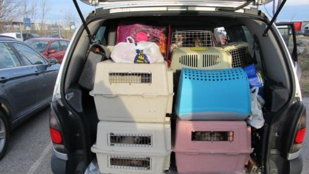 Beamte der Polizei Nickelsdorf stellten  22 Hundew…