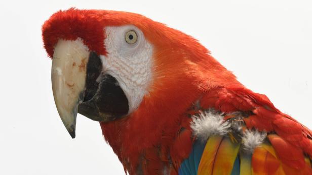 """Ankunft von Papagei """"Rosalinda"""""""