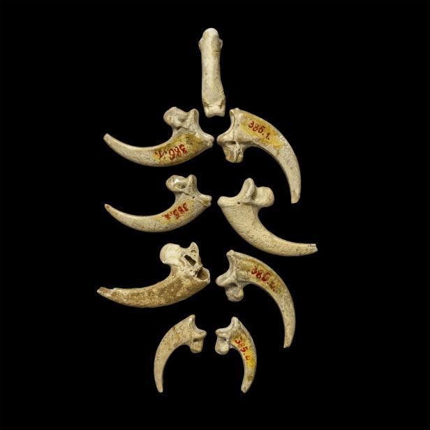 ältester schmuck der welt, ausgestellt im naturhis…