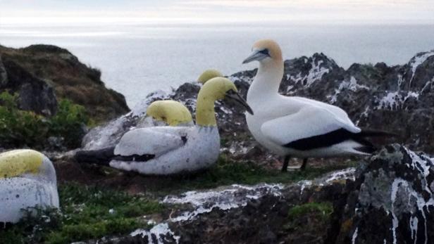NZealand-animal-offbeat