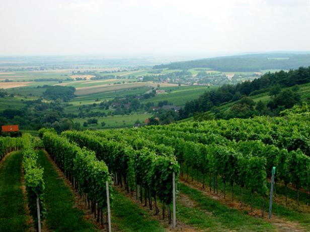 Klein, aber fein - das Weinbaugebiet Eisenberg ist aus seinem Dornröschenschlaf erwacht.