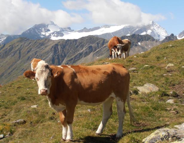 Osttirol, …