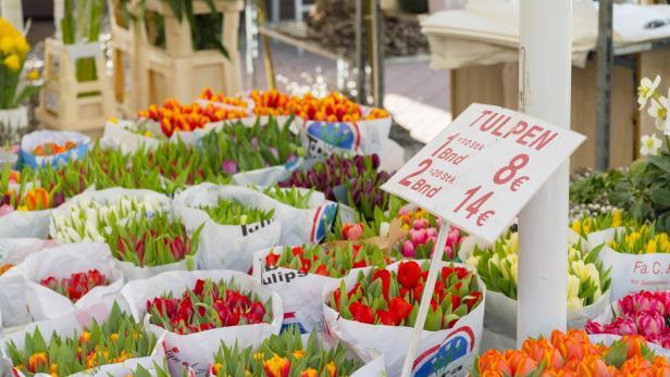 Tulpen bringen den Frühling auch mit nach Hause.