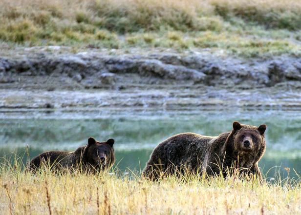FILES-US-ENVIRONMENT-WILDLIFE-BEARS