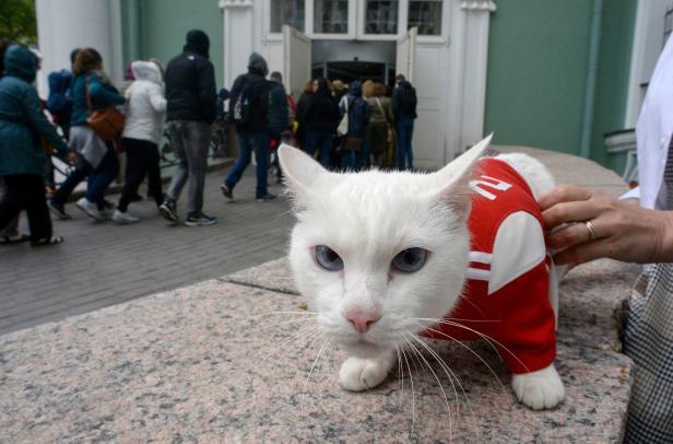 FBL-WC-2018-RUS-ANIMAL-CAT-OFFBEAT
