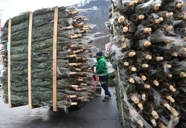 Wo Stand Der Erste Weihnachtsbaum.Wie Der Christbaum Nach österreich Kam Kurier At