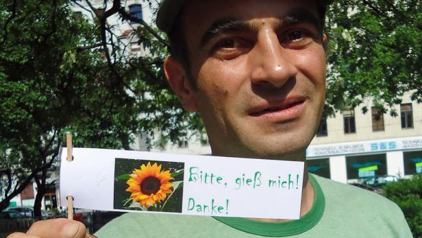 In Wien Neubau haben Guerilla-Gärtner einige Sonnenblumen gepflanzt und sind stolz auf das Ergebnis.