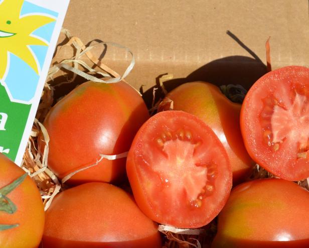 Ramallet alte mallorquinische Sorte rote Tomate aus Mallorca für Pa amb oli