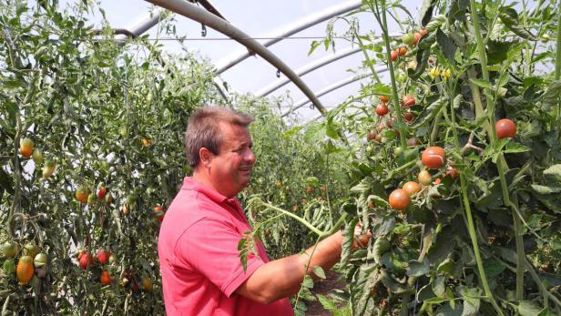 Tomatenparadies am Neusiedlersee