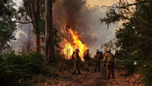 Feuer Madeira Aktuell