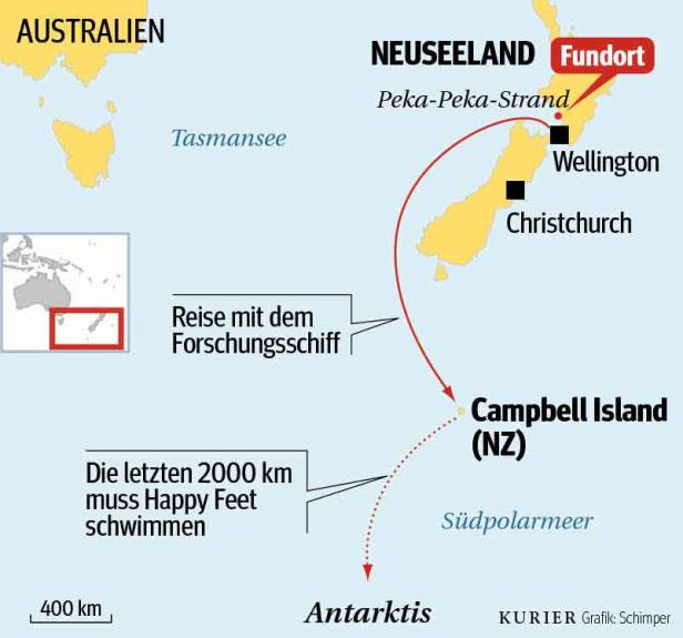 """Der Pinguin, der sich im Juni an einen Strand in Neuseeland verirrt hatte, wurde """"Happy Feet"""" getauft. Jetzt ist er am Weg zurück in seine Heimat"""