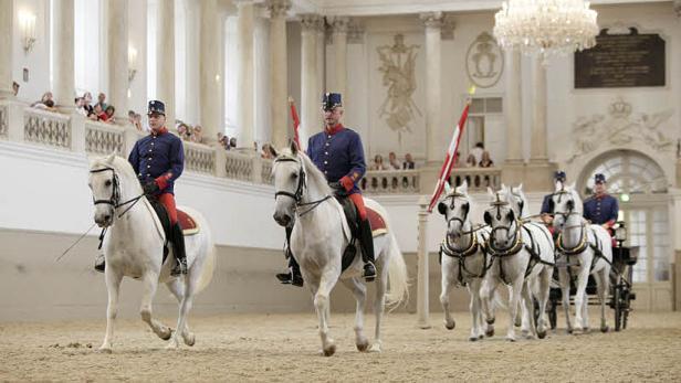So wenige Jungtiere gab es noch nie: Kritiker sprechen von Leistungsdruck, für die Chefin der weißen Pferde sind es normale Schwankungen.