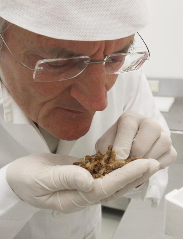 'Schaut nicht besonders hygienisch aus', urteilt Tierarzt Hans Treppo über sandige Meeresfrüchte
