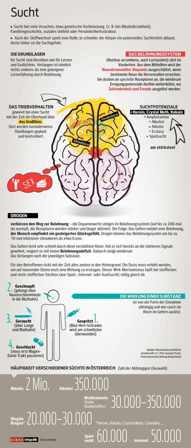 Beste Diagramm Der Anatomie Des Gehirns Fotos - Physiologie Von ...