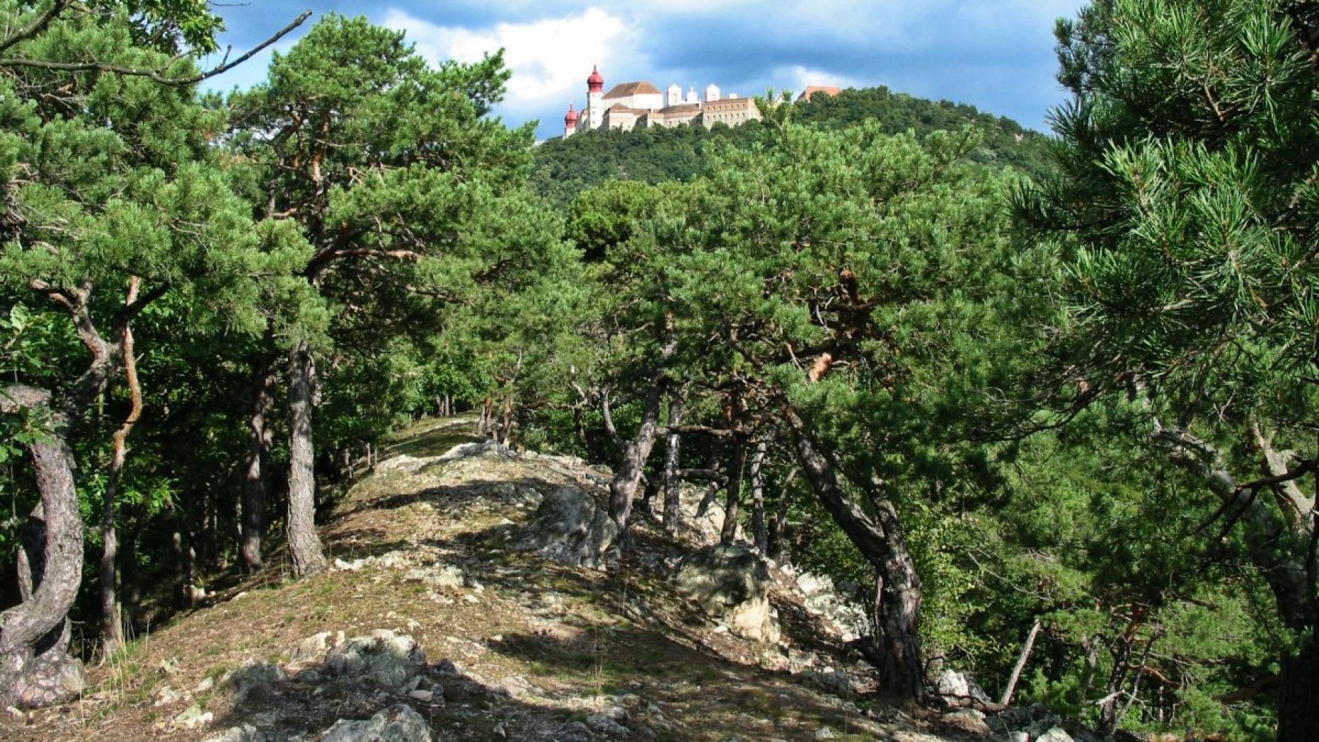 Dunkelsteiner Erlebnisschau - Gemeinde Haunoldstein in N