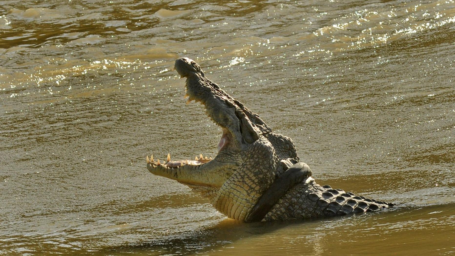 """Dieser """"Monster-Flüsterer"""" will das Krokodil vom Reifen befreien"""