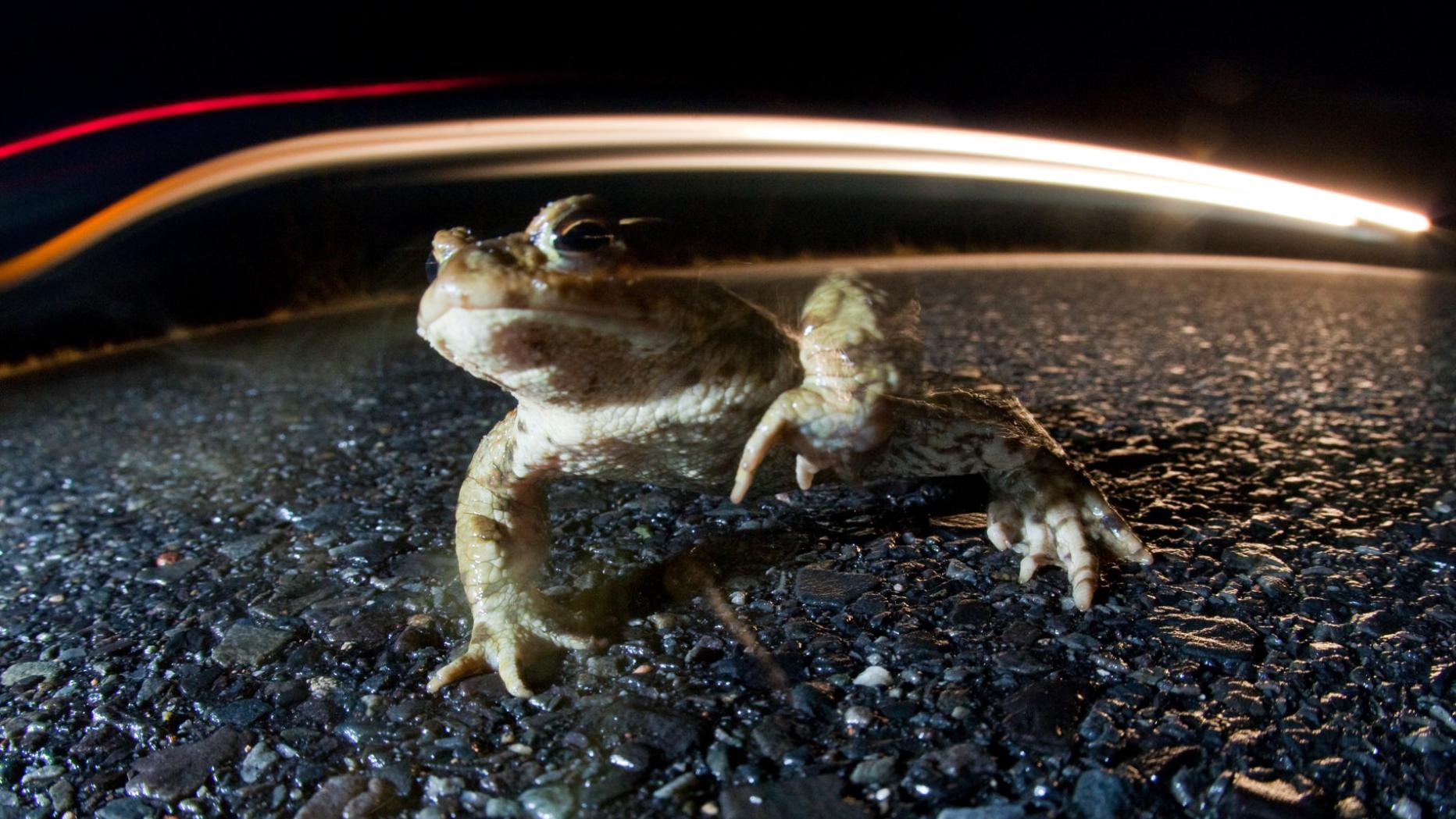 Frosch partnersuche