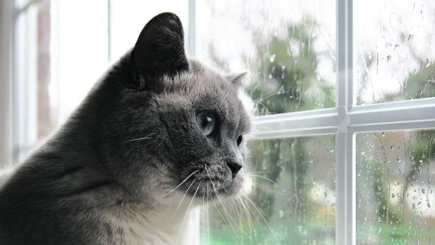 Fallschutz Fur Die Katze Kurier At