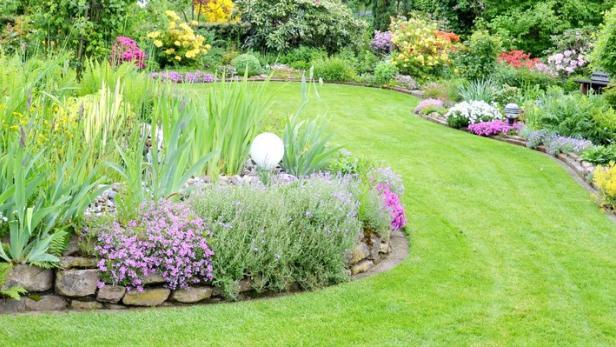 Die Vorteile Von Unkraut Im Garten Kurier At