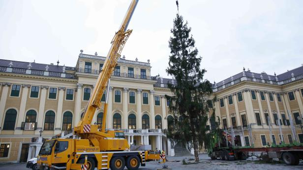 wien der sch nbrunner weihnachtsbaum steht. Black Bedroom Furniture Sets. Home Design Ideas