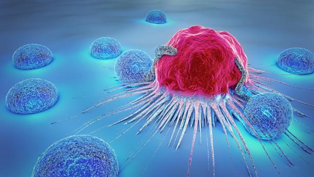 Wie sich Krebszellen im Körper ausbreiten   kurier.at