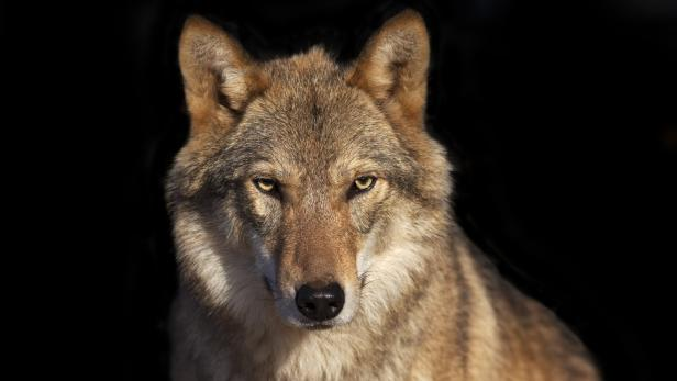 Partnersuche kärnten wolfsberg