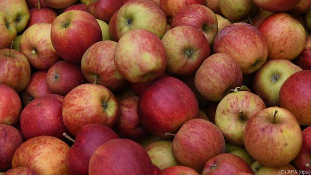 Die Apfelernte hat heuer früher als sonst begonnen